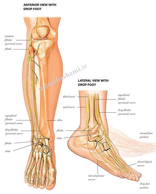 آناتومی پا در طراحی کفش