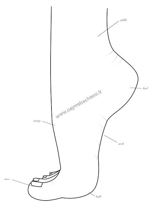 شناخت اجزای پا در طراحی کفش